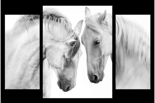 Модульная картина Лошади