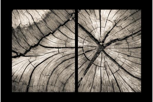 Модульная картина Текстура дерева